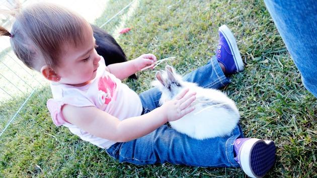 amelie-bunny