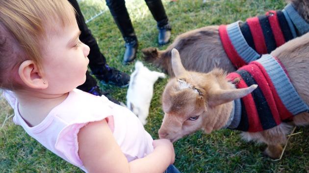 amelie-goat