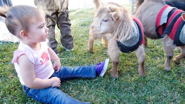 goat-tease