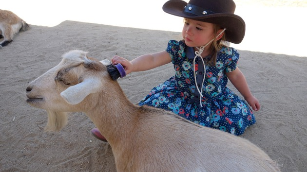 amelie-brushing-goat